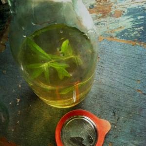lemon verbena syrup